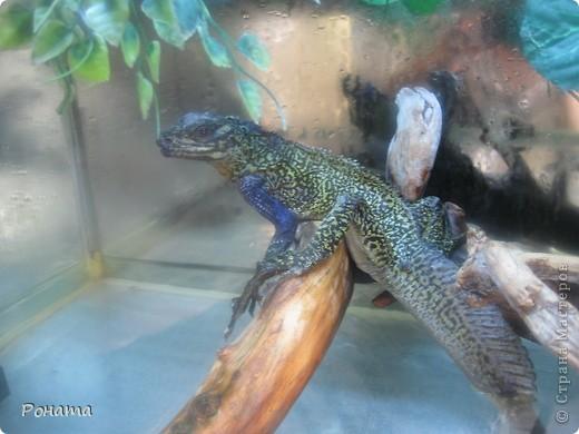 """Всем привет! Начало экскурсии по зоопаркам здесь - http://stranamasterov.ru/node/231393. А теперь мы отправимся на морской вокзал в галерею, где расположилась выставка экзотических животных """"Джунгли-парк"""".  фото 30"""