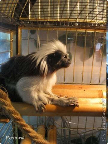 """Всем привет! Начало экскурсии по зоопаркам здесь - http://stranamasterov.ru/node/231393. А теперь мы отправимся на морской вокзал в галерею, где расположилась выставка экзотических животных """"Джунгли-парк"""".  фото 24"""