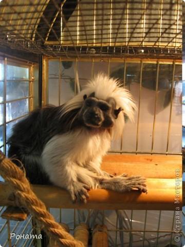 """Всем привет! Начало экскурсии по зоопаркам здесь - http://stranamasterov.ru/node/231393. А теперь мы отправимся на морской вокзал в галерею, где расположилась выставка экзотических животных """"Джунгли-парк"""".  фото 25"""