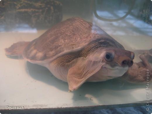 """Всем привет! Начало экскурсии по зоопаркам здесь - http://stranamasterov.ru/node/231393. А теперь мы отправимся на морской вокзал в галерею, где расположилась выставка экзотических животных """"Джунгли-парк"""".  фото 29"""