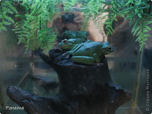 """Всем привет! Начало экскурсии по зоопаркам здесь - http://stranamasterov.ru/node/231393. А теперь мы отправимся на морской вокзал в галерею, где расположилась выставка экзотических животных """"Джунгли-парк"""".  фото 32"""