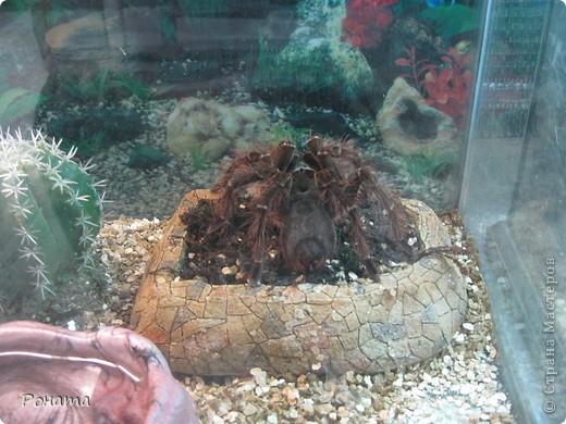 """Всем привет! Начало экскурсии по зоопаркам здесь - http://stranamasterov.ru/node/231393. А теперь мы отправимся на морской вокзал в галерею, где расположилась выставка экзотических животных """"Джунгли-парк"""".  фото 36"""