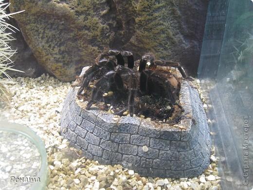 """Всем привет! Начало экскурсии по зоопаркам здесь - http://stranamasterov.ru/node/231393. А теперь мы отправимся на морской вокзал в галерею, где расположилась выставка экзотических животных """"Джунгли-парк"""".  фото 37"""