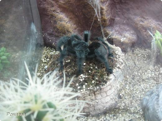"""Всем привет! Начало экскурсии по зоопаркам здесь - http://stranamasterov.ru/node/231393. А теперь мы отправимся на морской вокзал в галерею, где расположилась выставка экзотических животных """"Джунгли-парк"""".  фото 39"""