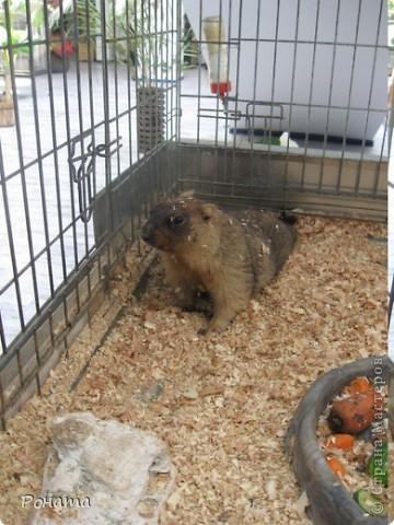 """Всем привет! Начало экскурсии по зоопаркам здесь - http://stranamasterov.ru/node/231393. А теперь мы отправимся на морской вокзал в галерею, где расположилась выставка экзотических животных """"Джунгли-парк"""".  фото 27"""