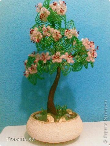 цветущая вишня фото 1
