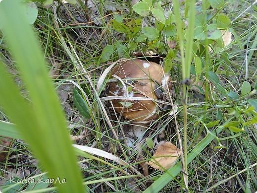 ... очень тепло и я всех приглашаю погулять со мной в лесу !!! фото 5