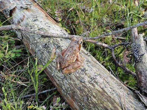 ... очень тепло и я всех приглашаю погулять со мной в лесу !!! фото 4