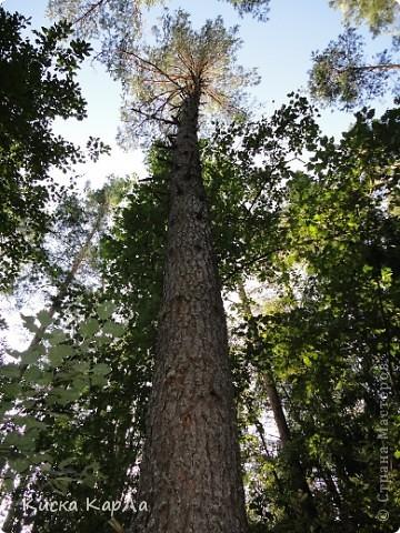 ... очень тепло и я всех приглашаю погулять со мной в лесу !!! фото 18