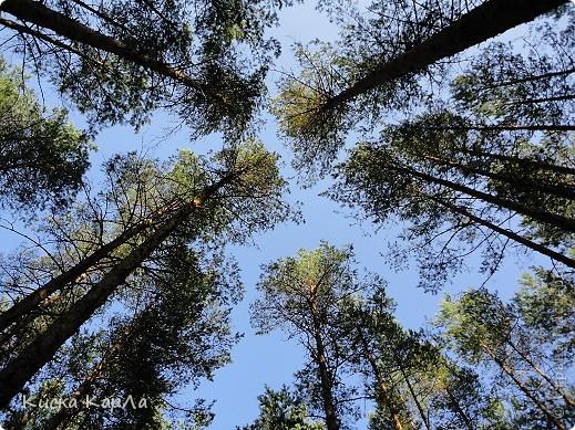 ... очень тепло и я всех приглашаю погулять со мной в лесу !!! фото 16