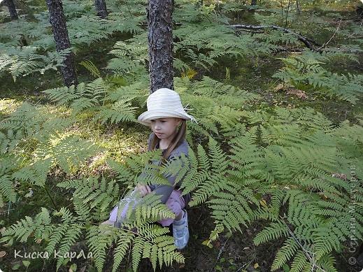 ... очень тепло и я всех приглашаю погулять со мной в лесу !!! фото 10