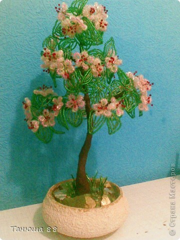 цветущая вишня фото 2
