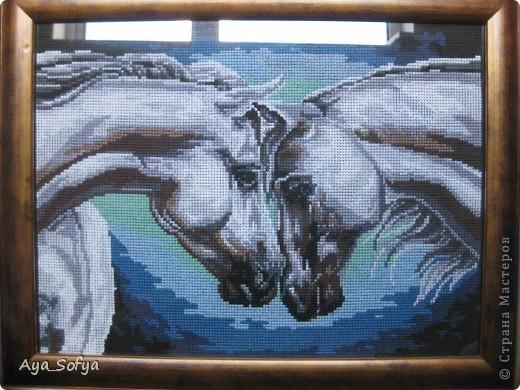 Лошадки фото 2