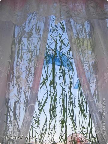 Прозрачный СКОТЧ и сухая трава. Всё, что нужно!!!!!! фото 9