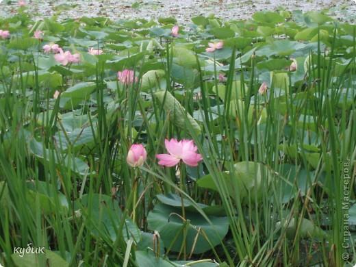 мы плавали на остров Путятин смотреть цветение лотоса и вот решила показать вам. фото 19