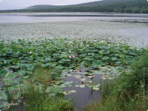 мы плавали на остров Путятин смотреть цветение лотоса и вот решила показать вам. фото 7