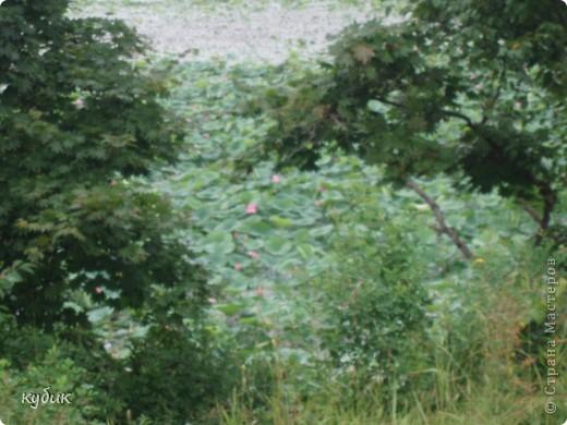 мы плавали на остров Путятин смотреть цветение лотоса и вот решила показать вам. фото 9
