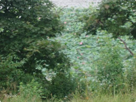 мы плавали на остров Путятин смотреть цветение лотоса и вот решила показать вам. фото 12