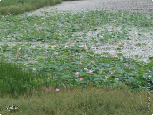 мы плавали на остров Путятин смотреть цветение лотоса и вот решила показать вам. фото 20