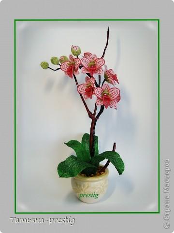 """Орхидея """"Мечта"""" (h=40см) фото 1"""