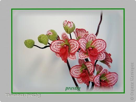 """Орхидея """"Мечта"""" (h=40см) фото 2"""