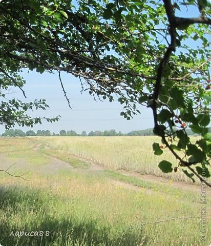 В этом году у соседей по даче поселились журавли, свили гнездо и конечно же появились журавлята. Ничего нового в этом нет. фото 18