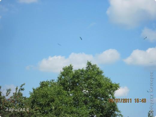 В этом году у соседей по даче поселились журавли, свили гнездо и конечно же появились журавлята. Ничего нового в этом нет. фото 5