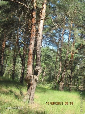В этом году у соседей по даче поселились журавли, свили гнездо и конечно же появились журавлята. Ничего нового в этом нет. фото 10