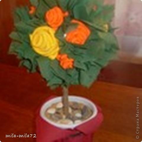 Мои цветущие деревья фото 2