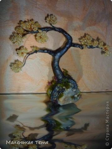 Деревца фото 8