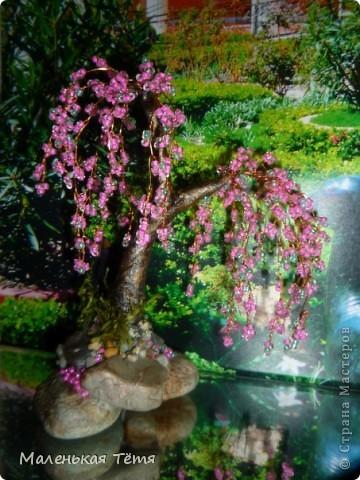 Деревца фото 7