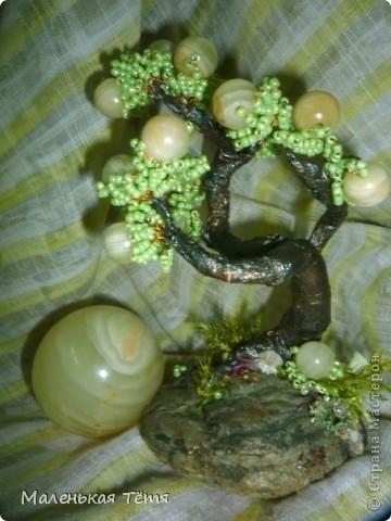 Деревца фото 6