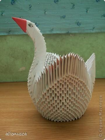белая лебедь фото 1