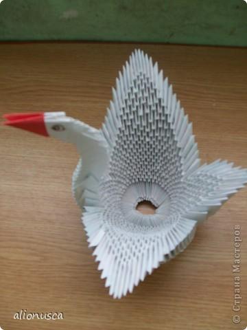белая лебедь фото 3