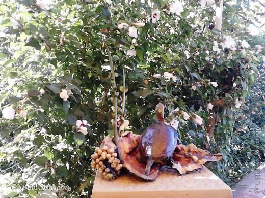 Однажды муж принёс с охоты панцирь черепахи.Он нашел его на берегу реки. Он пролежал у меня больше полгода и вот мне пришла в голову мысль сделать черепаху на огромной коряге.Нашла очень фактурную корягу. Поработала с ней. Добавила растительность (плод каштана с листочками из мелких ракушек. фото 6