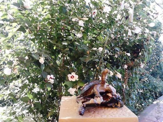 Однажды муж принёс с охоты панцирь черепахи.Он нашел его на берегу реки. Он пролежал у меня больше полгода и вот мне пришла в голову мысль сделать черепаху на огромной коряге.Нашла очень фактурную корягу. Поработала с ней. Добавила растительность (плод каштана с листочками из мелких ракушек. фото 3