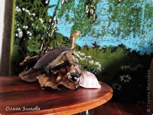 Однажды муж принёс с охоты панцирь черепахи.Он нашел его на берегу реки. Он пролежал у меня больше полгода и вот мне пришла в голову мысль сделать черепаху на огромной коряге.Нашла очень фактурную корягу. Поработала с ней. Добавила растительность (плод каштана с листочками из мелких ракушек. фото 4