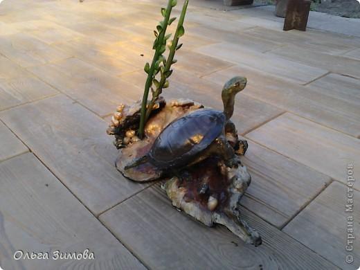 Однажды муж принёс с охоты панцирь черепахи.Он нашел его на берегу реки. Он пролежал у меня больше полгода и вот мне пришла в голову мысль сделать черепаху на огромной коряге.Нашла очень фактурную корягу. Поработала с ней. Добавила растительность (плод каштана с листочками из мелких ракушек. фото 1
