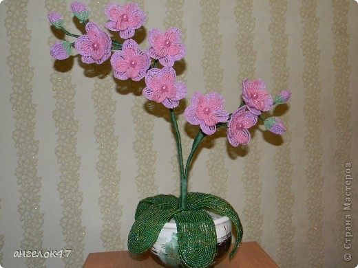 орхидея. фото 2