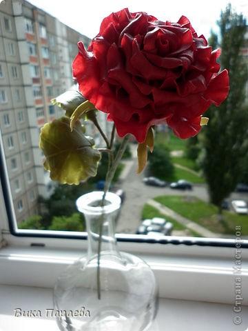 Всем доброго времени суток! Надеюсь я Вам еще не надоела своими розами? Если нет тогда хорошо) На этот раз решила слепить бардовую розу, какова цвета будет следующая, даже не представляю))) фото 1