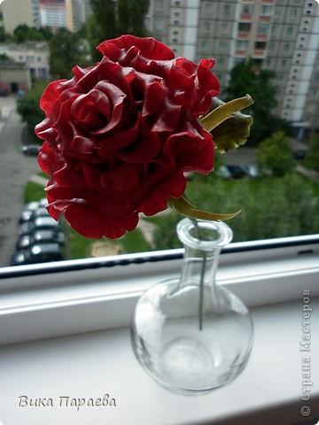 Всем доброго времени суток! Надеюсь я Вам еще не надоела своими розами? Если нет тогда хорошо) На этот раз решила слепить бардовую розу, какова цвета будет следующая, даже не представляю))) фото 2
