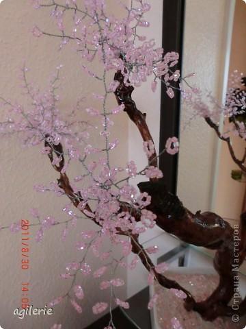 Вот и я хочю похвастаться своей работой)).Уж очень хотелось сделать это чюдестное дерево для себя! Люблю смотреть на его цветение!!!   Сакура сделана на основе натурального дерева(т.е его ствол).Вот такоя была моя идея!    Возможно кто-то уже делал подобное,но я на этом сайте такого не встречала. фото 7