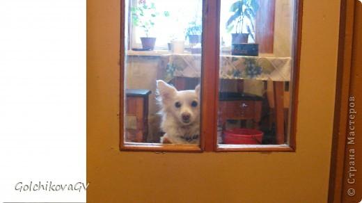 Клепка, большое имя Клеопатра, уже 3 года живет с нами как член семьи. Когда она появилась, мы назвали ее Кнопка, но оказалось, что соседскую собачку тоже так зовут, пришлось спешно менять имя. Клепка - по-моему созвучно, поэтому собачка  сильно не пострадала, а продолжала откликаться уже на это имя ( я почитываю Донцову, поэтому кличка  пришла как-то само собой). фото 8