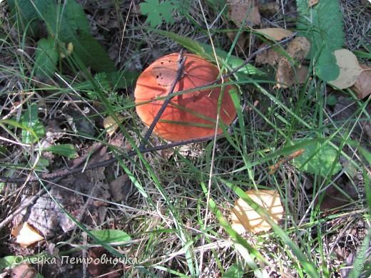 ...не на улице, в лесу!!! Пошла на разведку, а вдруг...                            Подосиновики. фото 7