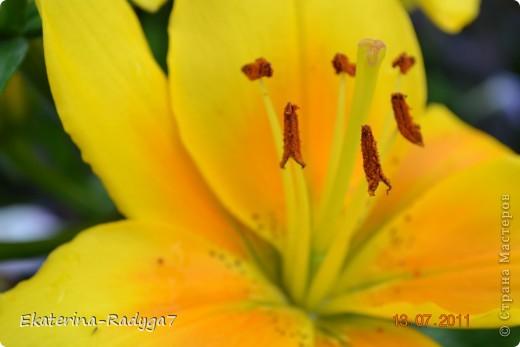 Лилии на дачке (с макро фото) фото 4