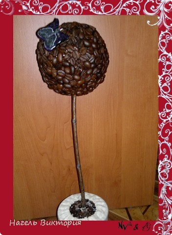 настоящее кофейное дерево фото 1