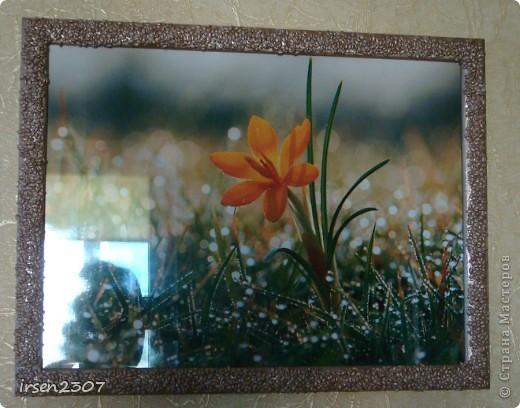 Макароны-ракушки фото 5
