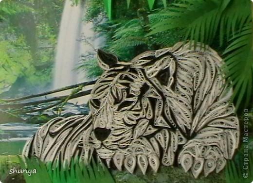 Здравствуйте! Очень давно мне не давал покоя леопард Saphir, так хотелось сделать что-то подобное. И вот... выставляю на суд жителей Страны своего тигра.  фото 2