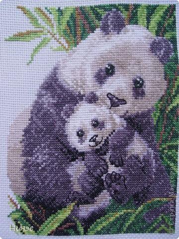 """Панда с малышом"""