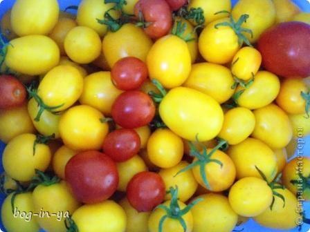Вот такие цукини выросли. Мне расцветка желтого очень нравится! Вообще-то он должен быть однотонным(первые такими и были - золотистыми), а вот переопылился от своих зеленых собратьев. Попробую посушить для рукоделия, как здесь http://stranamasterov.ru/node/94412?c=favorite. Спасибо за идею marina_flora фото 4